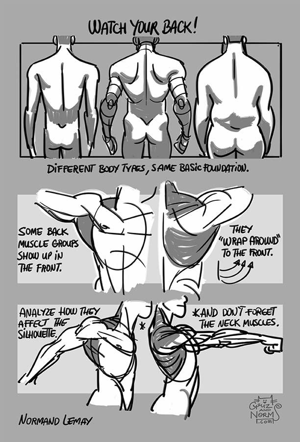 grizandnorm:Tuesday Tips - WATCH YOUR BACK!A reminder to not forget the large muscle groups in the back. They add structure and clearly influence the silhouette in different positions. Of course, I used a very muscular character to show more clearly those groups, but every body types will have those muscle groups underneath.-n
