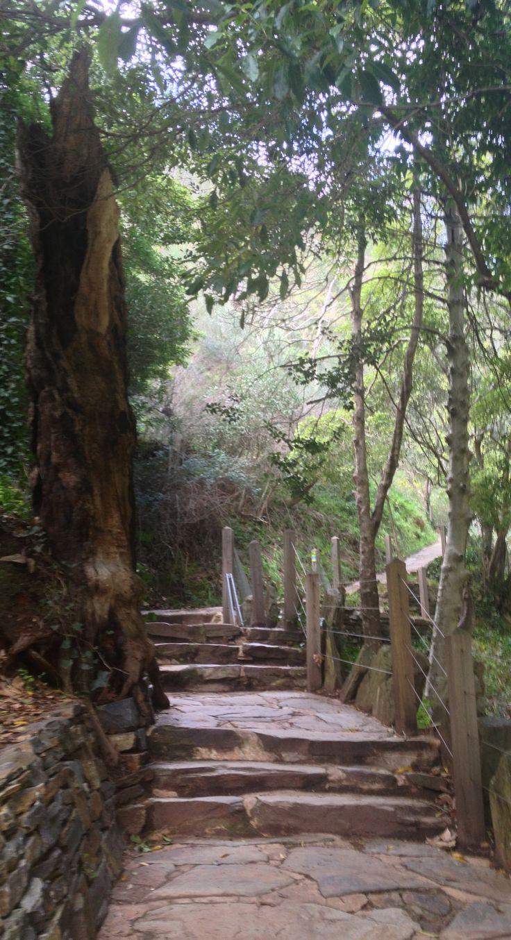 Mount Lofty