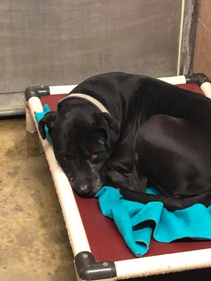 Adoptable Dog Spends Second Thanksgiving In Ohio Shelter