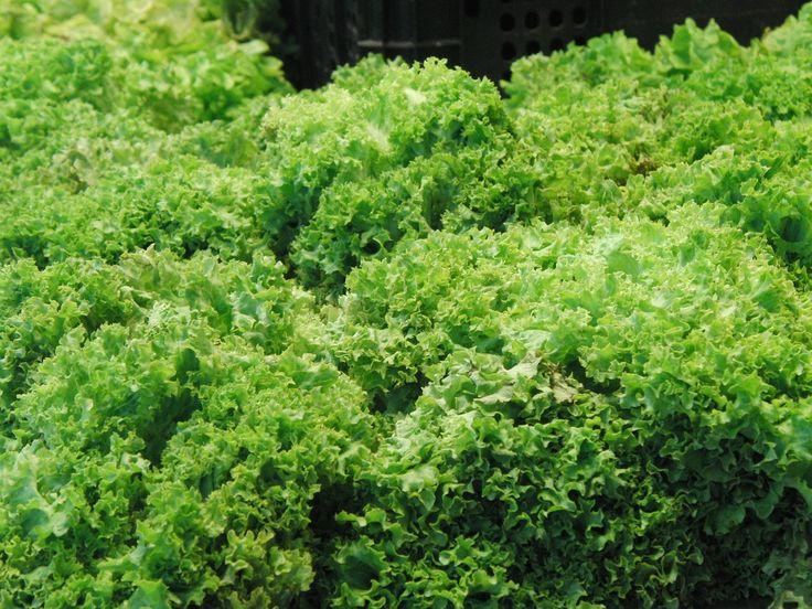 La #escarola tiene un alto contenido en agua (95%). Es rica en vitaminas A, C, B1 y B2 y también en minerales. Imprescindible en tus #ensaladas.