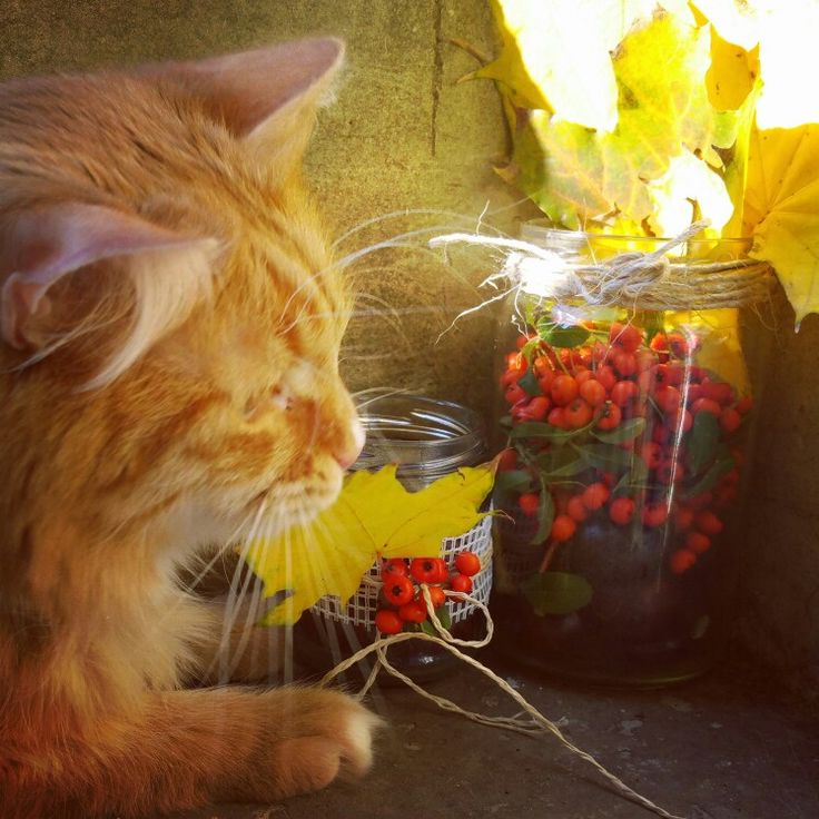 Fall decor mycat