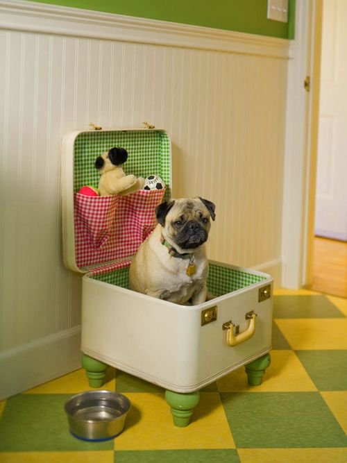 This is an AWESOME version of the suitcase dog bed. ♥ (I can imagine Jeffy jumping up and trying to rip one of those toys out of the pocket and the top thumping down on his head. xD)