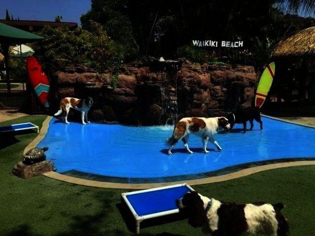 Caparadise Frameranch Household Visitpet Paradise Coursepe