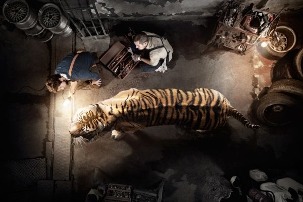 Tiger in the streets. Save the Animals. Wwf Extinction Cant Be Fixed photographed by Gonzaga Manso- ONE EYELAND
