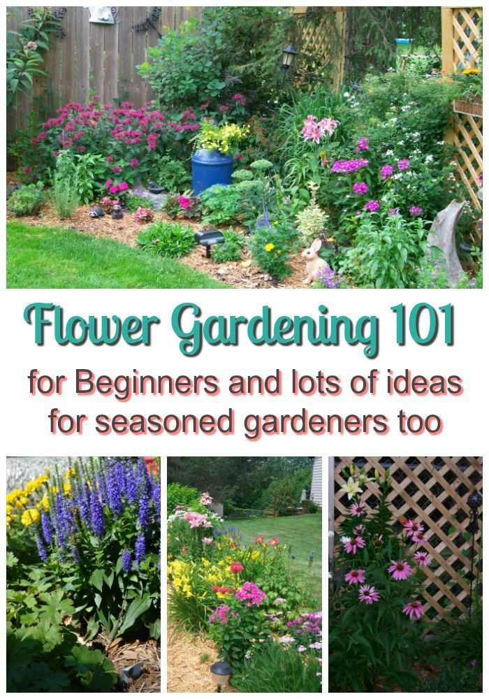 Flower Gardening 101 For Beginners And, How Do You Start A Flower Garden For Beginners