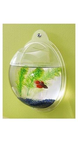 1000 images about fish bowls on pinterest pet for Fish bowl pets