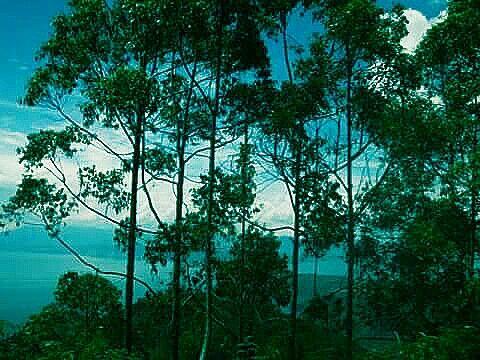 Lake Toba, Danau Toba, Indonesia