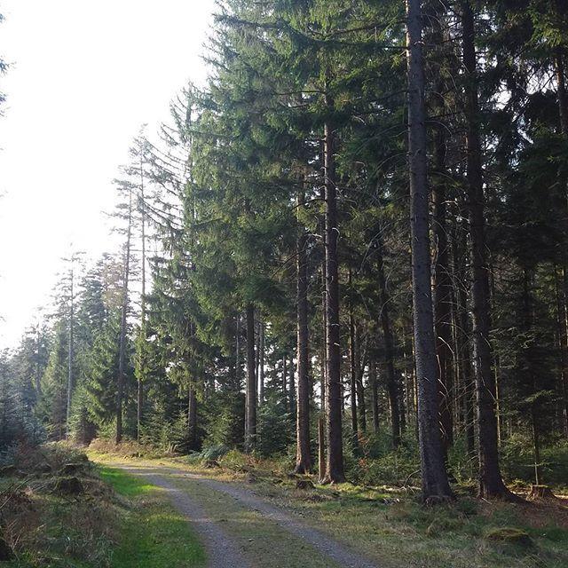 Oh, wie schön sind die Wälder in Bad Herrenalb. Vor allem, wenn es noch so ne Lichtstimmung hat.#hiking #wandern #wald #bergfrei #badherrenalb #wanderlust #Spaziergang #deutschewälder #tanne #nordschwarzwald #schwarzwald #germany #süddeutschland #gutelaune #iloveit