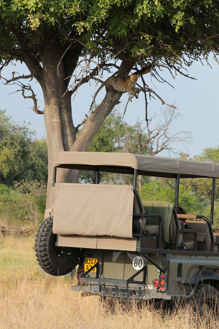 Game viewing at its best. Had a wonderful time with this leopard at Vumbura!