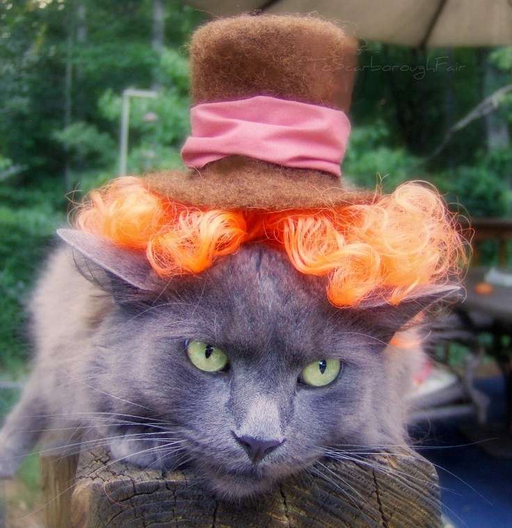 A real Cat In a Hat!! Pet Cat Costumes