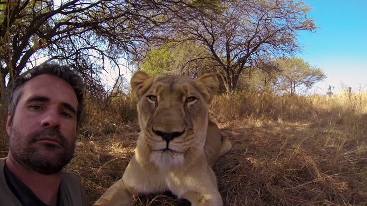 Man Tries to Hug a Wild Lion, You Won't Believe What Happens Next! #selfie