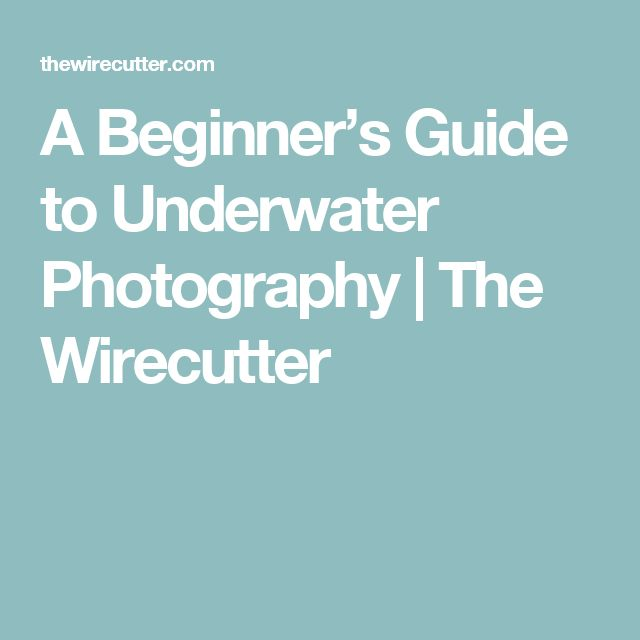 A Beginner's Guide to Underwater Photography | The Wirecutter