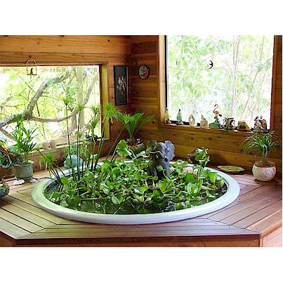 25 best ideas about indoor pond on pinterest outdoor for Indoor pond design