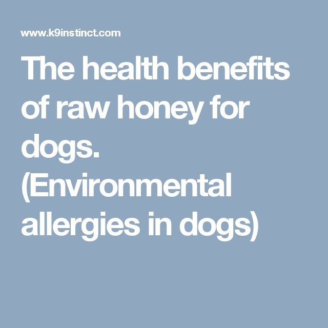 The health benefits of raw honey for dogs. (Environmental allergies in dogs)