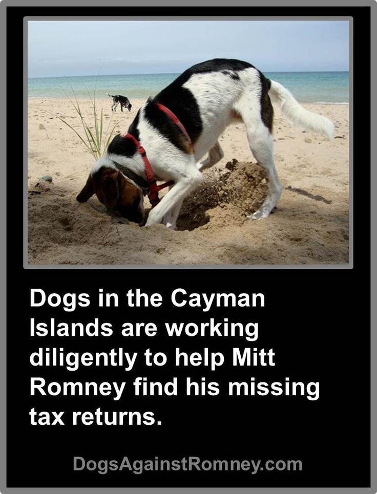 Do Border Collies Make Good Inside Dogs