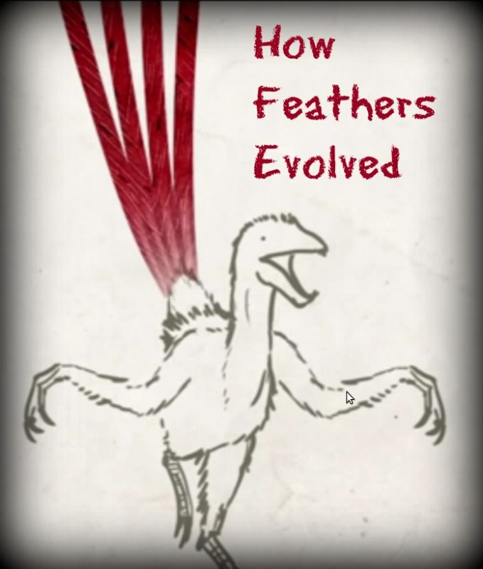 a short analysis of the evolution of feathers The evolution of feathers and flight in birds hu and colleagues' analysis 1 of anchiornis are frequently short-lived and unstable.