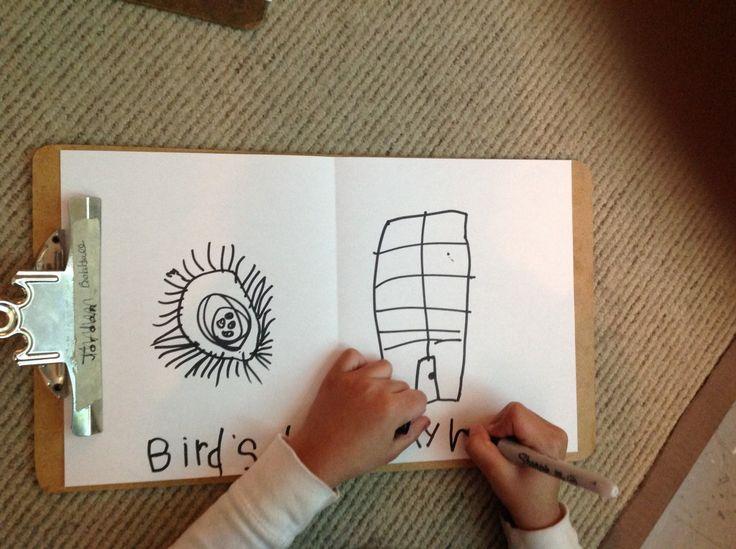 our home vs bird nests