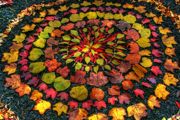 Leaf Mandala by Andy Goldsworthy