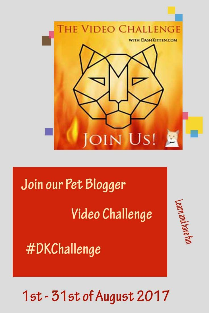 Newbie to video? Need some cheerleading to encourage your blogging videos? Join othe Dash Kitten Video Challenge on 1at of August 2017