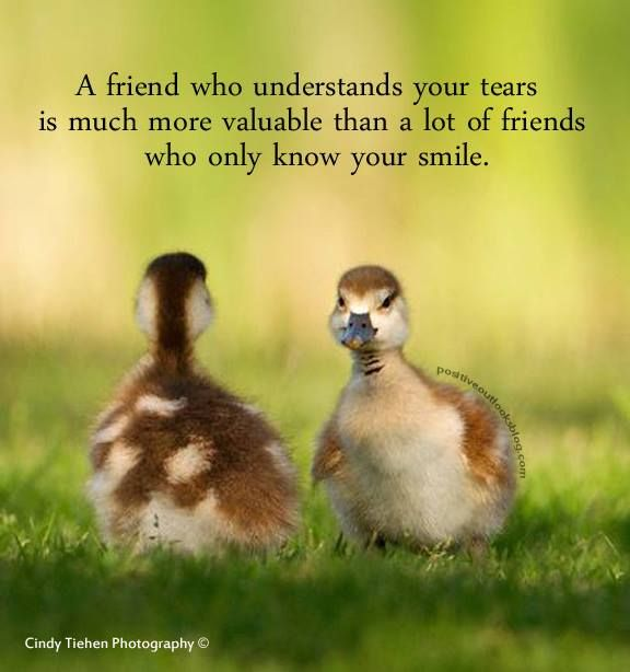 Best Motivational Quotes For Students: 101 Best Images About ☮ We All Need A Friend On Pinterest