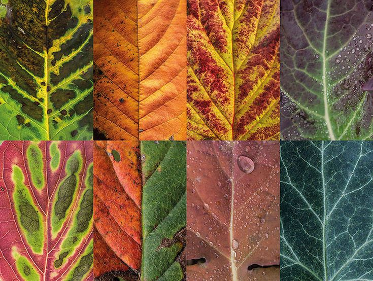 Incredibly Detailed Hundreds of Leaves
