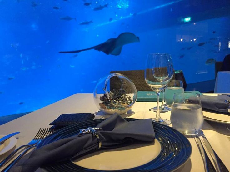 What can be more wonderful than dining with the company of marine animals at Ocean Restaurant by Cat Cora (Resorts World at Sentosa)? Located inside the S.E.A. Aquarium, Marine Life Park, you can savour a delicious meal with your loved one while enjoying the magnificent view of the Open Ocean habitat, where more than 100,000 marine animals reside.  Photo by @garywonghc on Instagram.