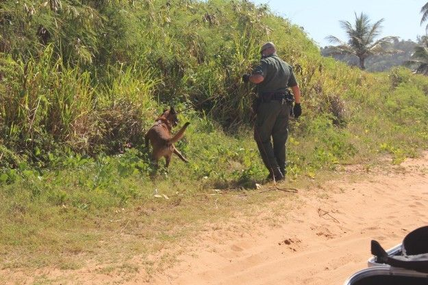 Patrulla Fronteriza y Policía de Puerto Rico arrestan 7 indocumentados