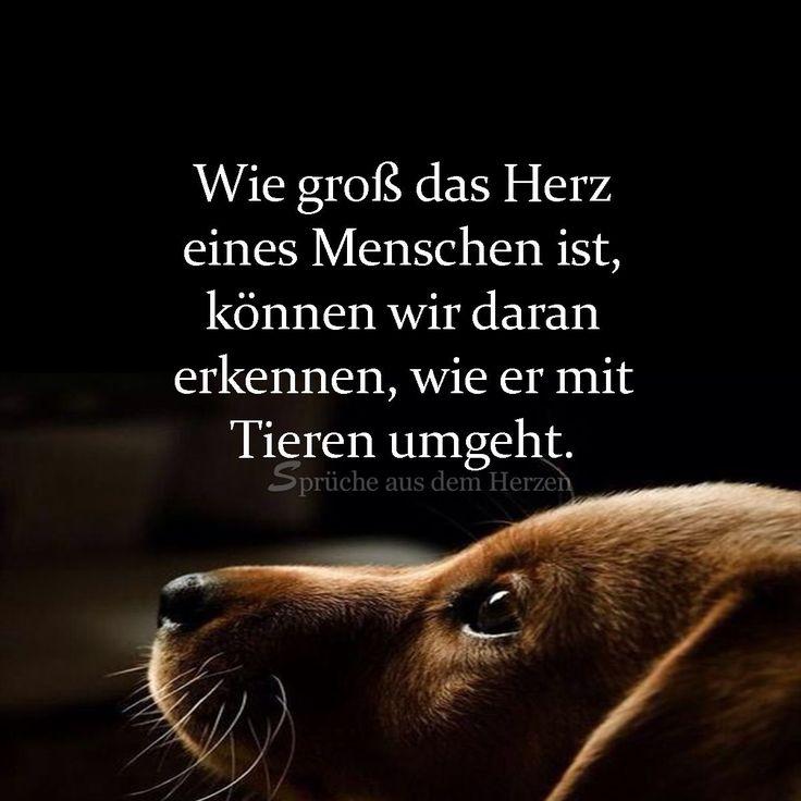 #herz #hunde #hundeliebe #zitate #wiewahr – Anne Ernst