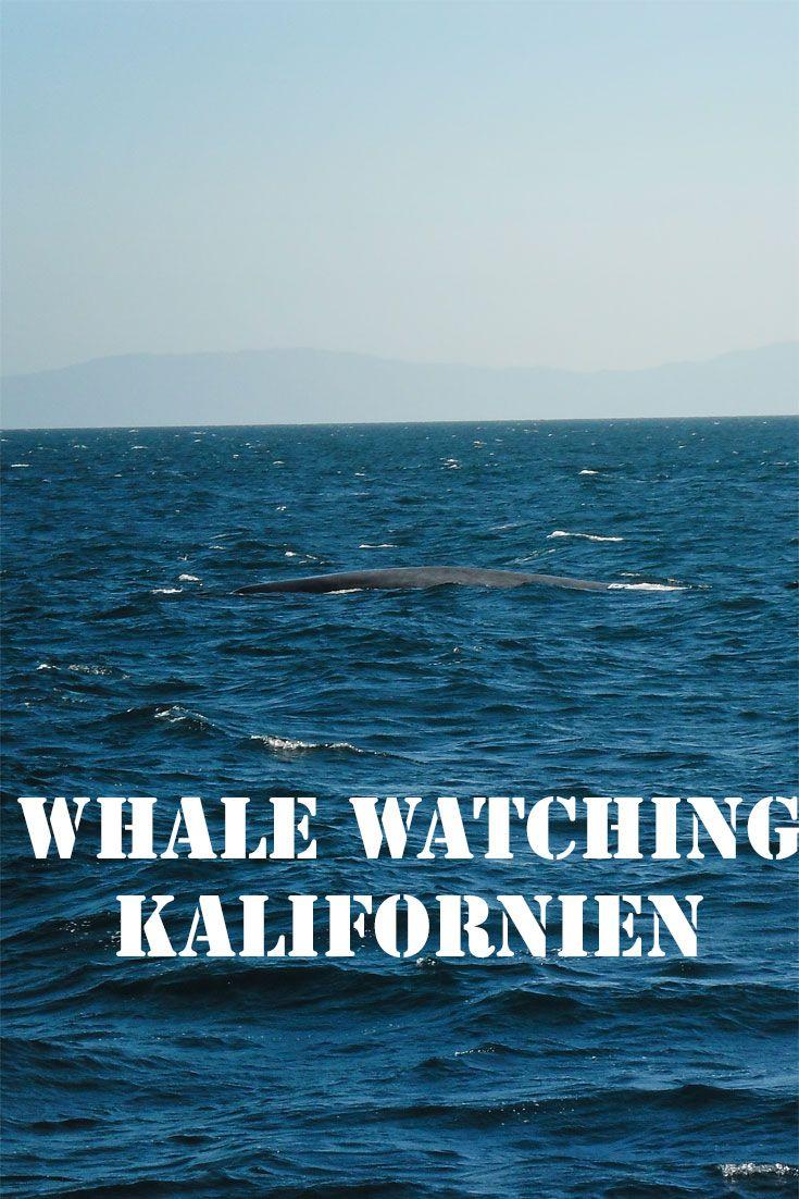 Mein Traum Wale und Delfine zu sehen wurde während meines Auslandspraktikums in Los Angeles endlich wahr. Ich fuhr von Dana Point und Long Beach aus aufs Meer zum #WhaleWatching.