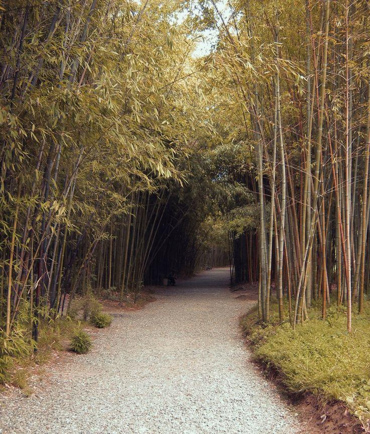 Bamboo forest by Elena Stuukstly Kozyryatskaya on 500px