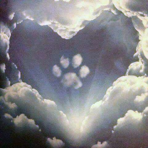"""Paws that reach out from Heaven... Gone but NEVER forgotten."""