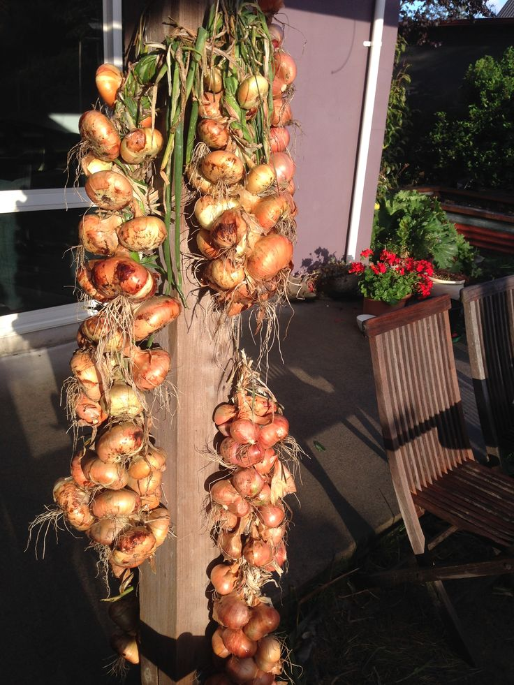 onions and shallots 2015