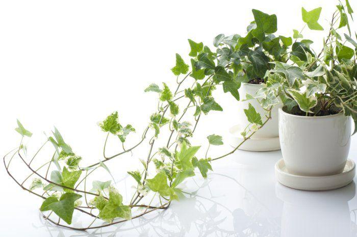 pflanzenideen deko basteln topfpflanzen