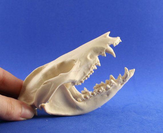 handmade replica possum skull by skullery on Etsy