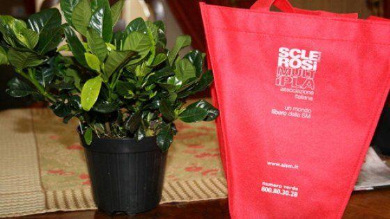 Il 5,6 e 8 marzo Torino, insieme a 5.000 piazze italiane, fiorirà e profumerà di gardenie, grazie all'appuntamento di raccolta fondi e