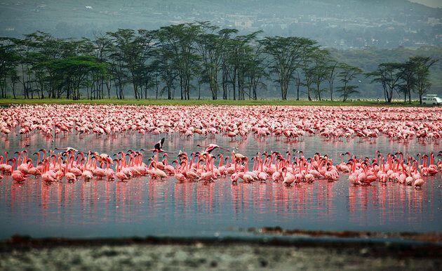 (Lake Nakuru National Park)