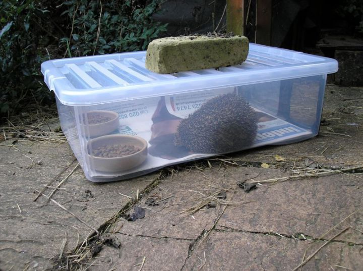 How to build a hedgehog feeding station. Read my blog for how to build a hedgehog feeder to feed garden hedgehogs - step by step guide. https://littlesilverhedgehog.wordpress.com/2016/06/20/build-a-hedgehog-feeding-station/
