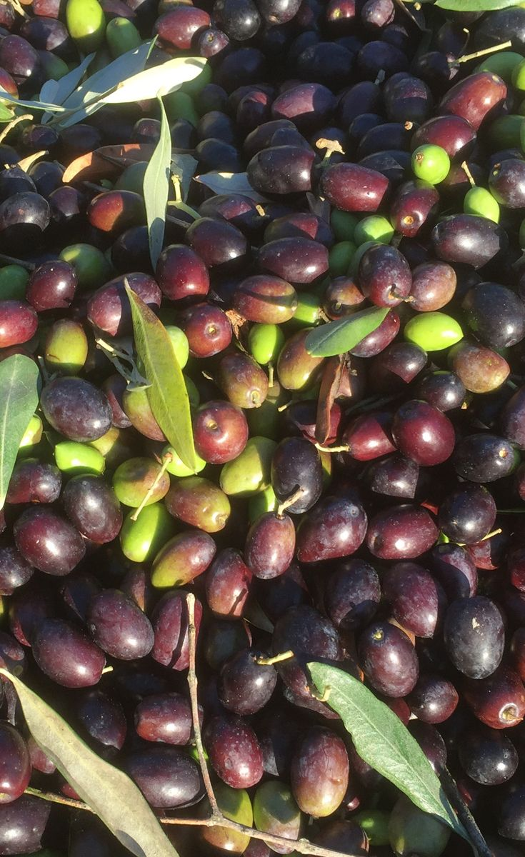 The olives are so beautiful to look at and soft and anti-stressing to touch.