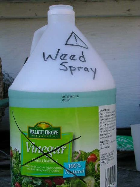 (Blue-)Green Weed Spray - from household ingredients.
