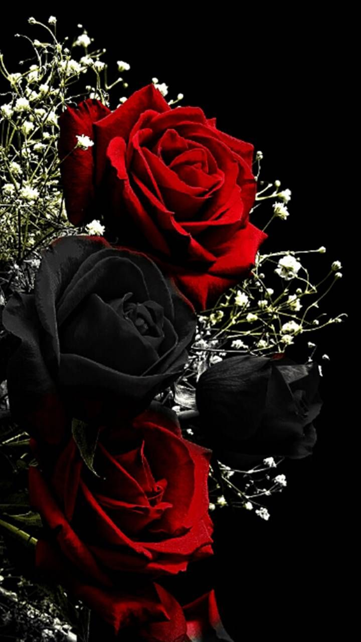 Download Red Black Roses Wallpaper By Perfumevanilla 12 Free