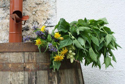 rostlinné výluhy - hojivo