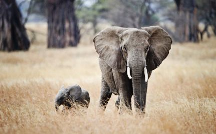 7 Easy Ways to Help This World Elephant Day