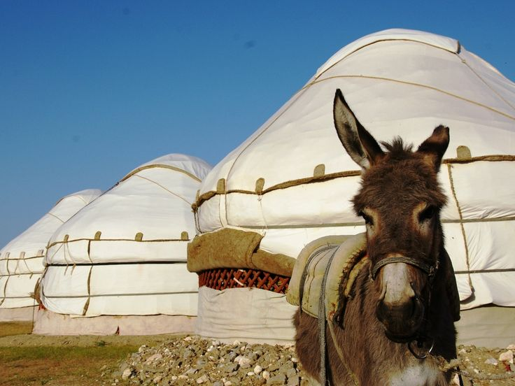 #Oezbekistan Overnachten in een Yurt