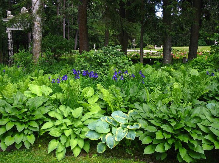 Shade-Loving Bushes and Shrubs   ... irises accented the hostas and ferns and other shade loving plants