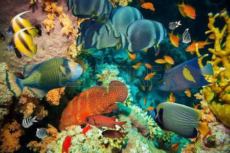 Sea Fan Stock Photos & Pictures. Royalty Free Sea Fan Images And ...