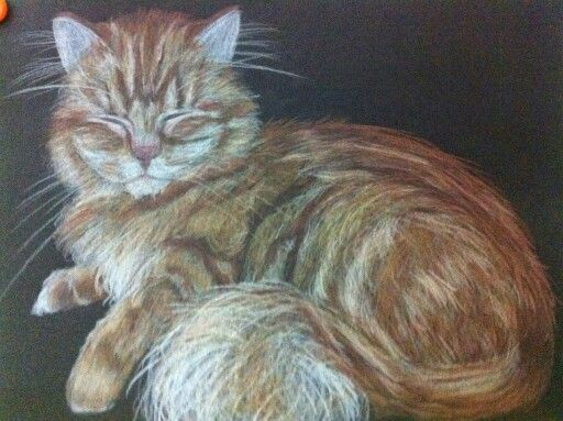 Cat nap..... Polychromo pencil drawing