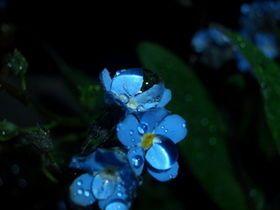 きっと誰もが心惹かれる「美しい日本語」~花~ - NAVER まとめ