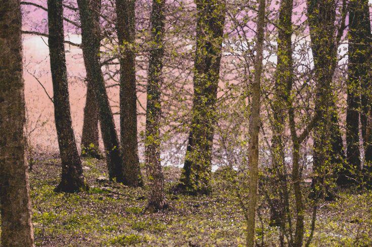 swing forest by Graziella Serra Art & Photo on 500px