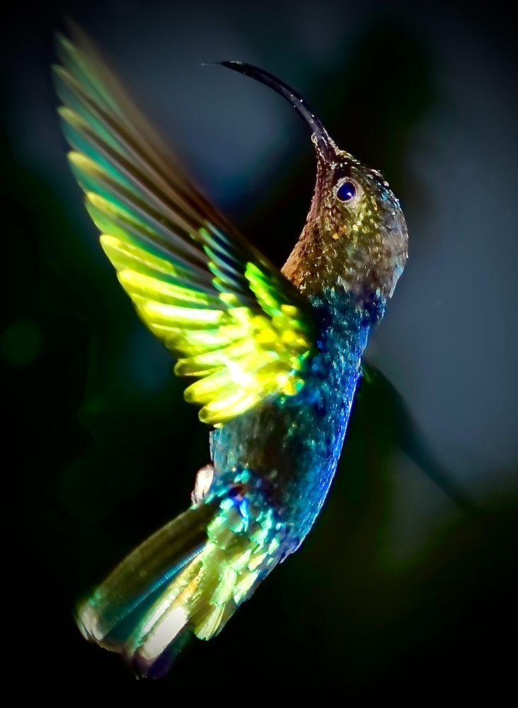 Bird on wings by Attila Molnar