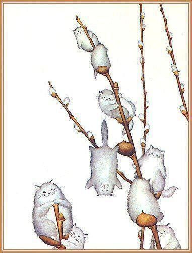 pussy willows :)
